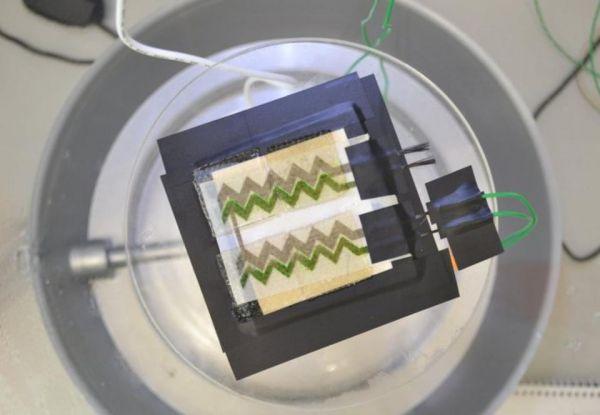 Солнечные панели изцианобактерий напечатали наобычном принтере